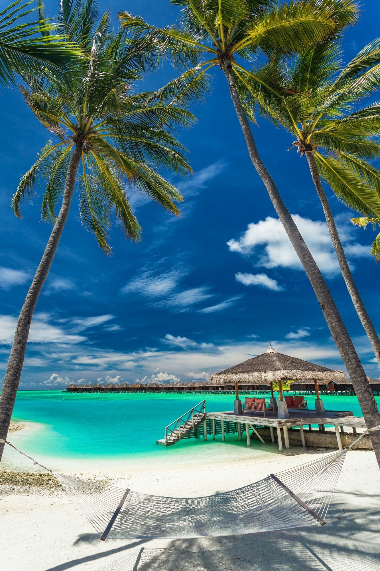 Hammock between palm trees on a tropical beach, Maldives
